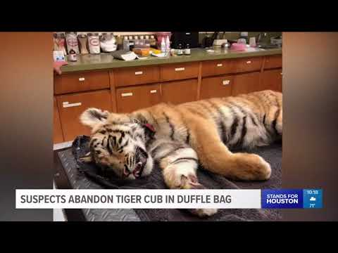 Border Patrol agents find tiger cub in duffel bag after immigrants try to enter US illegally