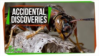 6 Accidental Discoveries You've Probably Never Heard Of