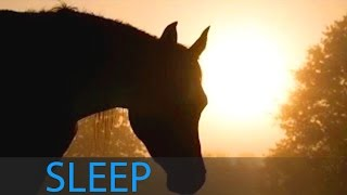 8 Hour Delta Waves Sleep Music: Relaxing Music, Calming Music, Soothing Music, Soft Music ☯131