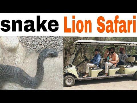 Lion Safari at Chattbir Zoo snake, tiger, 369 mammals, 400 birds