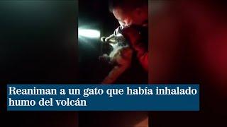 Reaniman a un gato que había inhalado humo del volcán
