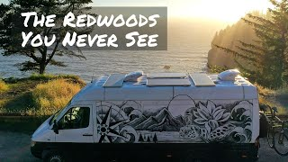 VAN LIFE Road Trip in California and Oregon Redwoods + Jedediah Smith Camp Ground  | FnA Van Life