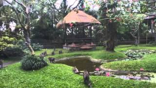 2015-08-11 Timelapse - Monkeys in the garden, Ubud, Bali