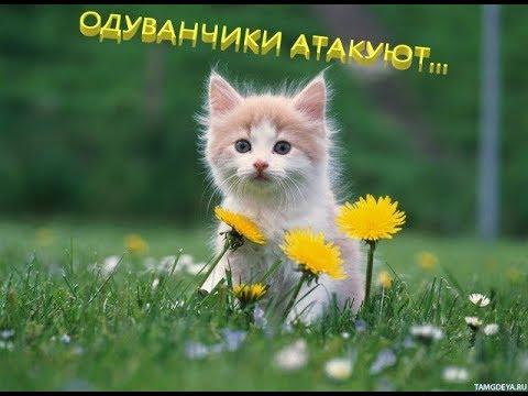 Выходные с одуванчиками / Weekend with dandelions
