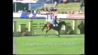 video of Tangelo van de Zuuthoeve