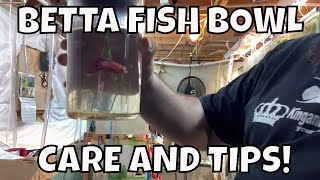 How to Set Up a Betta Fish Bowl and Betta Fish Bowl Care