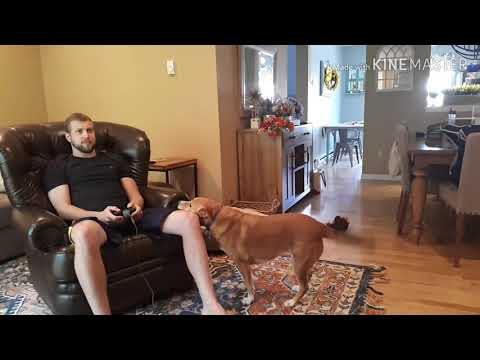 Όταν ο σκύλος δεν σε αφήνει να παίξεις videogames