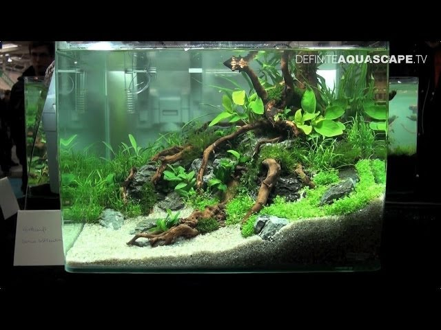 Qualifyings for The Art of the Planted Aquarium 2015 - Nano category compilation
