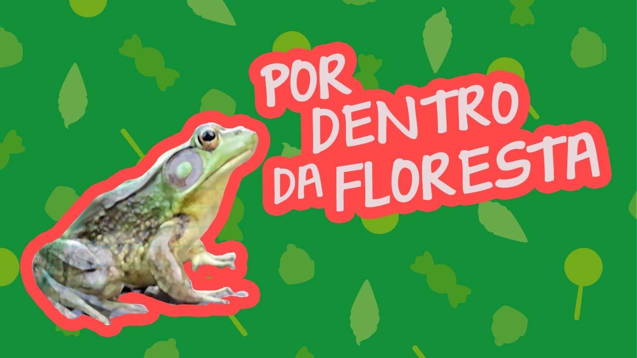 POR DENTRO DA FLORESTA | BEBÊ MAIS BICHOS