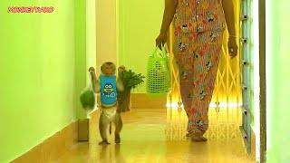 Adorable Monkey Kako Help Mom Walking Carry Vegetable And Eat Grape Fruits