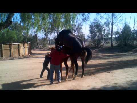 Horse having sex