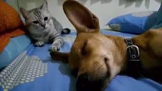 Cat responds to dog farting in his sleep