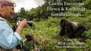 preview picture of video 'Linda's Mountain Gorilla Encounter  -- Video by Bill & Linda Klipp --www.WildlifePhotos.me'