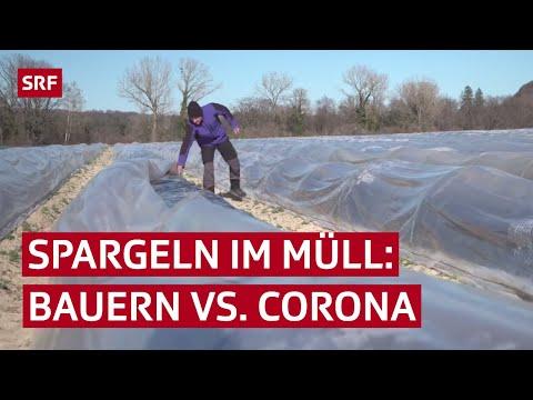Reportage von der Spargel-Ernte: Bauern leiden unter Coronakrise   SRF News