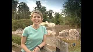 Great Hotels - Disney's Wilderness Lodge