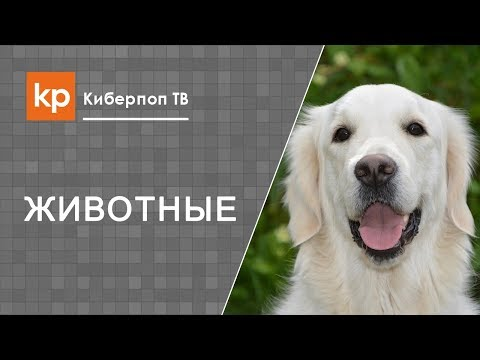 Куда попадет душа собаки после смерти?