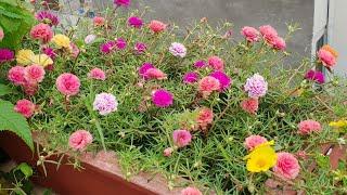 Flowers In My Garden || My Todays Blooms || Fun Gardening