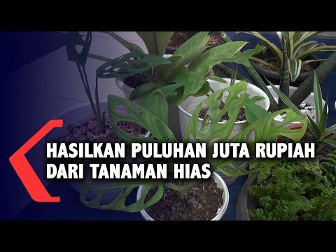hasilkan puluhan juta rupiah dari tanaman hias