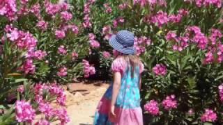 Kaylie's Garden