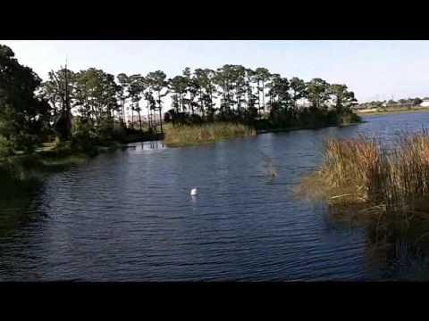 Pond Fishing in Florida #3: Five Pounda!
