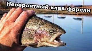 Платная рыбалка узкое