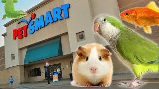 EXPLORING PETSMART ! ANIMAL FRIENDS EVERYWHERE!