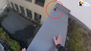 Download Youtube: Duck Family RESCUED From Roof | The Dodo