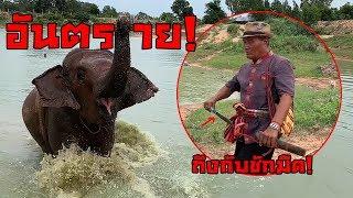 ช้างตกมันเล่นน้ำ! โหดมาก! คุณตาต้องชักมีด!เพราะ?
