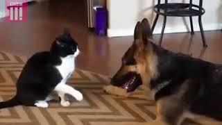 Кошки и Собаки - Триллер с неожиданным финалом