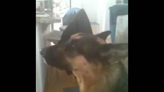 Antagonizing My Grandpas Dog - Video Youtube
