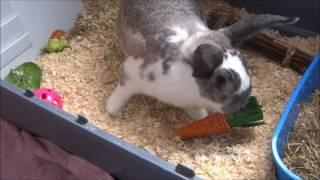 Vlog - Getting Two Rabbits!