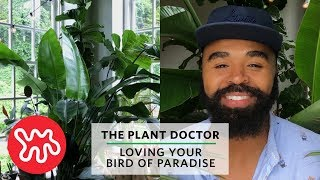 Loving Your Bird Of Paradise | The Plant Doctor