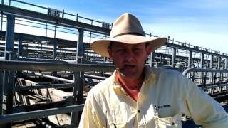 Mount Gambier Cattle Market Report - 15th March 20