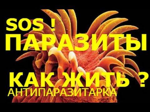 Лечение от паразитов краснодар