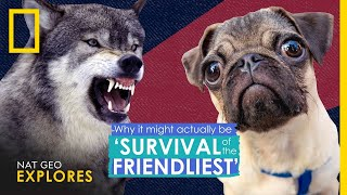 Why It Actually Might Be 'Survival of the Friendliest' | Nat Geo Explores thumbnail