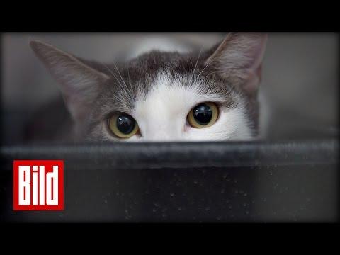 Katze klaut Mittag vom Herrchen - Essen, jump-through ( Futterneid / Tatze / Vitamin )