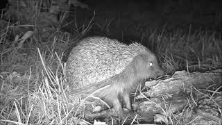 Wildlife Trail Camera - 26.6.2019