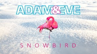 Adam & Eve - Snowbird (Official lyric video)