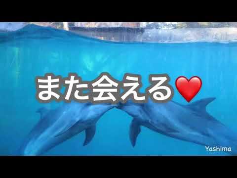 新屋島水族館【公式】新屋島水族館〜営業再開のお知らせ〜