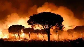 Испания: редкие животные в зоне огня