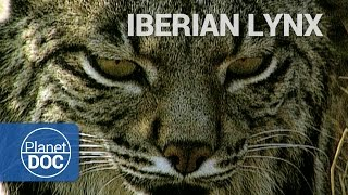 Wild Animals | Iberian Lynx - Planet Doc Full Documentaries