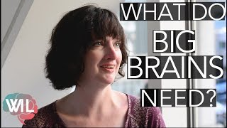 Growing a Big Brain with Meat   Amber O'Hearn