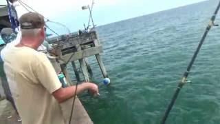 Dania beach pier fishing