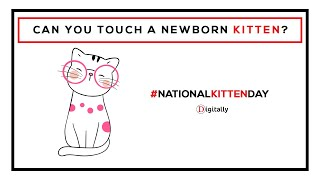 When Can You Handle Newborn Kittens?