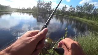 Петровский канал в синявино рыбалка весной места