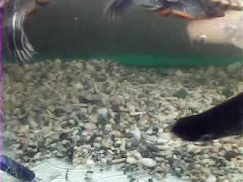 My fish tank ..hular(3)