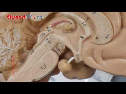 Léčba prostaty Volgograd