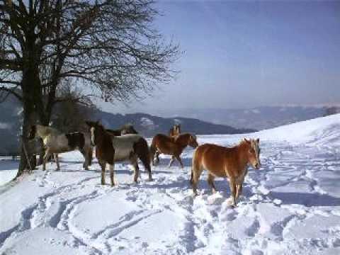 Schneepferdchen:-)