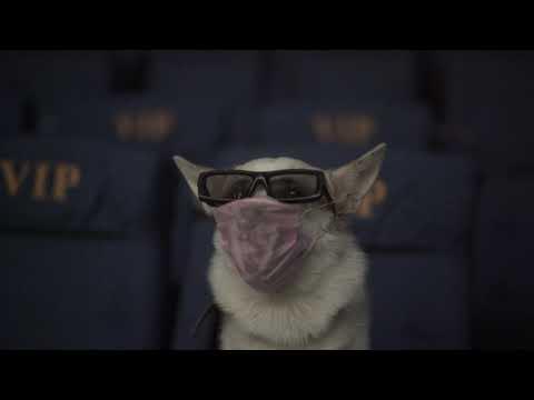 Видеофакт: В кинотеатре Якутска прошел первый в России кинопоказ для собак