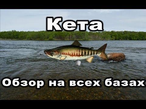 Русская Рыбалка 3. Кета. Обзор на всех базах.